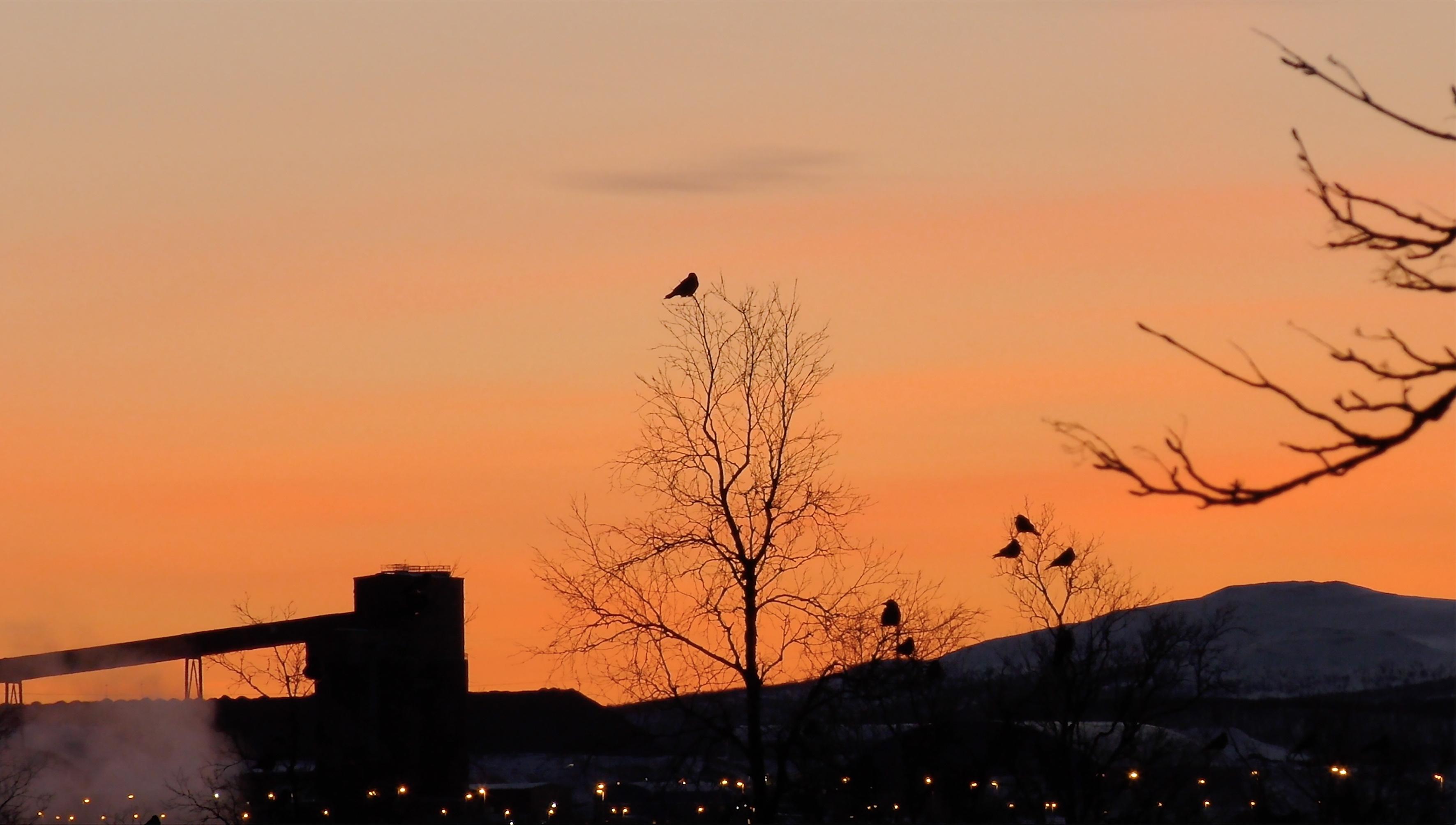 Fågel mot röd himmel mindre