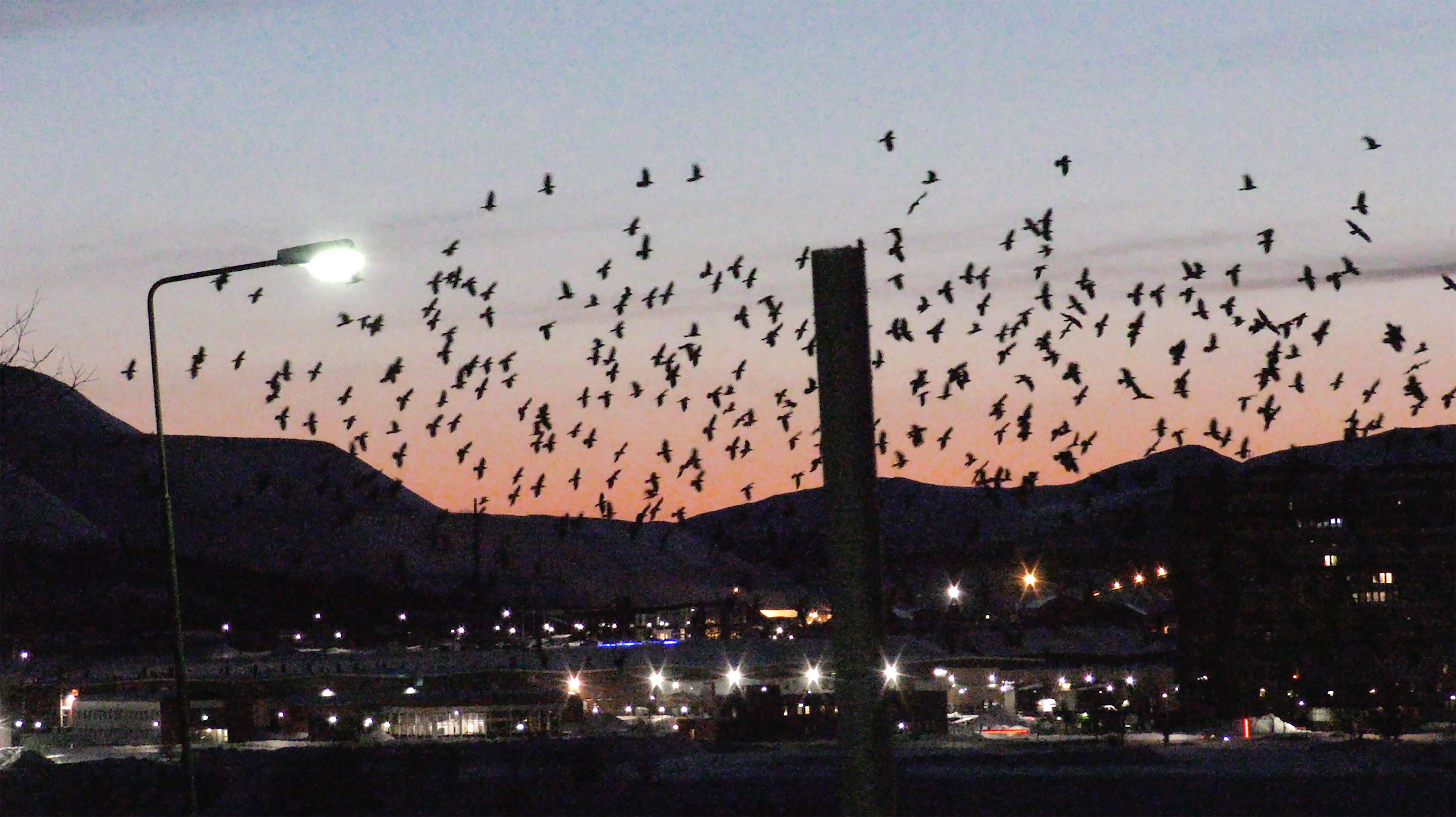 fåglar och LKAB mindre